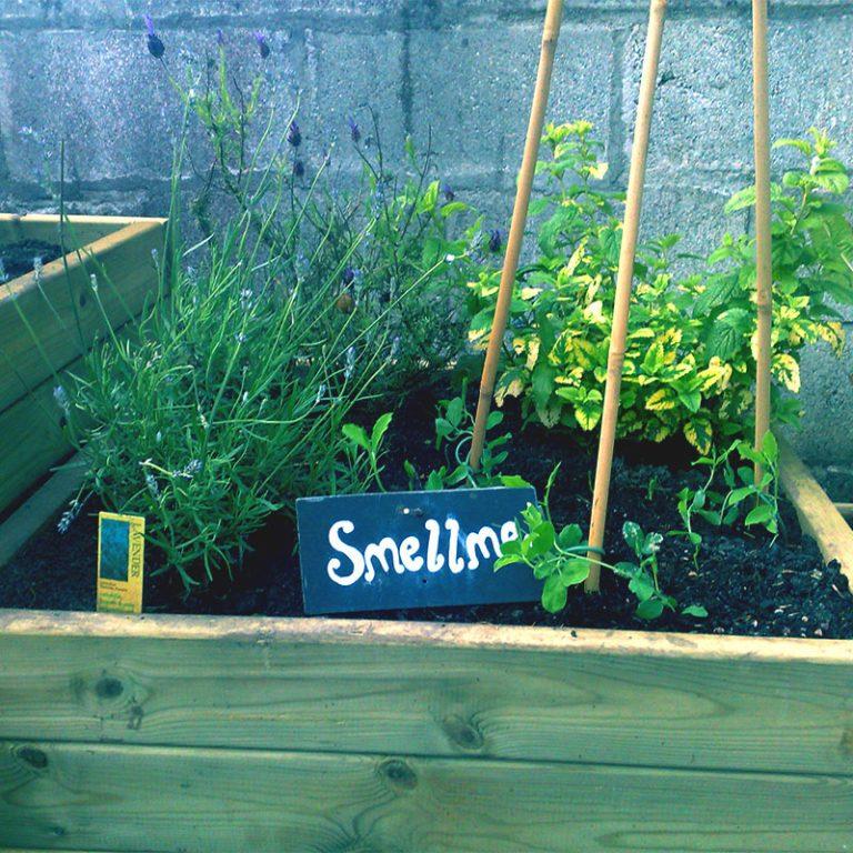Smell Me Sensory Planter Stax