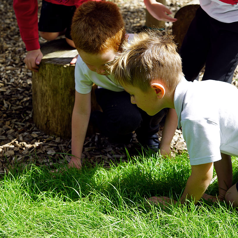 Delabole Nature Play